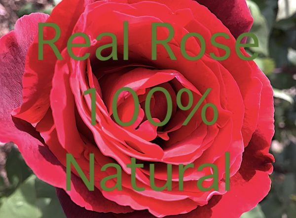 rose oil sunline soap beauty bar with vitamin E and skin moisturiser 24 carat real gold